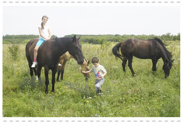 Наши лошади